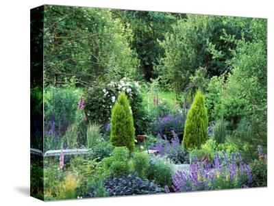 View into Country Garden with Perennials and Small Trees Summer-Lynn Keddie-Stretched Canvas Print
