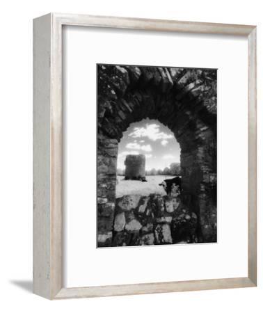 Cows, Ballybeg Abbey, Ireland-Karen Schulman-Framed Photographic Print
