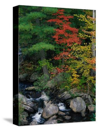 Fall Scenic, Acadia National Park, Maine-Elizabeth DeLaney-Stretched Canvas Print