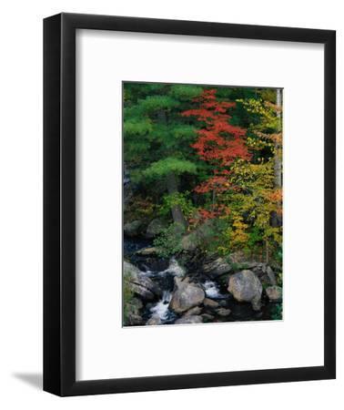 Fall Scenic, Acadia National Park, Maine-Elizabeth DeLaney-Framed Photographic Print