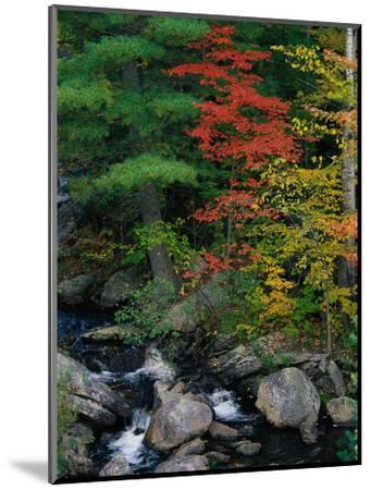 Fall Scenic, Acadia National Park, Maine-Elizabeth DeLaney-Mounted Photographic Print