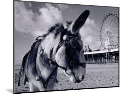 Donkey at Shorefront, Blackpool, England-Walter Bibikow-Mounted Photographic Print