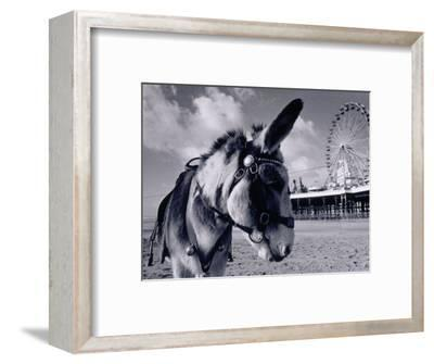 Donkey at Shorefront, Blackpool, England-Walter Bibikow-Framed Photographic Print