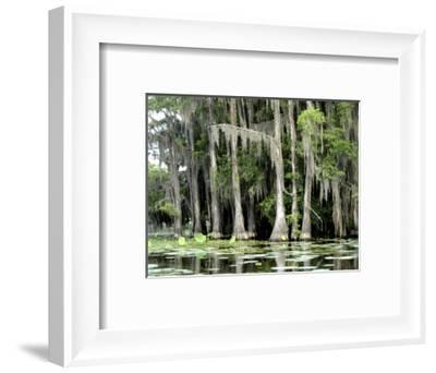 Moss Covered Bald Cypress Trees, Caddo Lake, TX-Ray Hendley-Framed Photographic Print