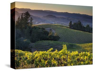 Healdsburg, Sonoma County, California: Vineyard and Winery at Sunset-Ian Shive-Stretched Canvas Print