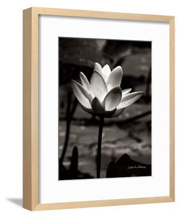 Lotus Flower VII-Debra Van Swearingen-Framed Art Print