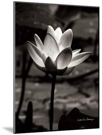 Lotus Flower VII-Debra Van Swearingen-Mounted Art Print