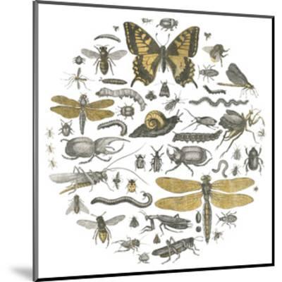 Insect Circle II-Wild Apple Portfolio-Mounted Art Print