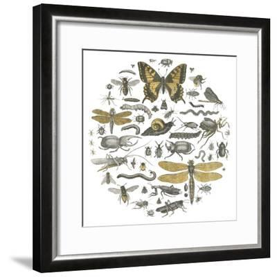 Insect Circle II-Wild Apple Portfolio-Framed Art Print