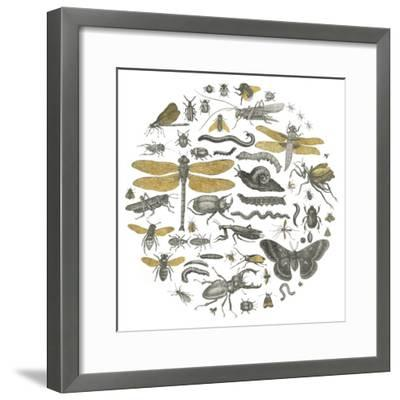 Insect Circle I-Wild Apple Portfolio-Framed Art Print
