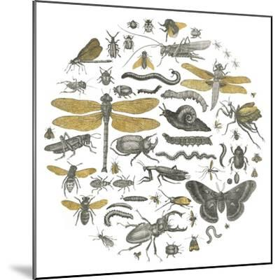 Insect Circle I-Wild Apple Portfolio-Mounted Art Print