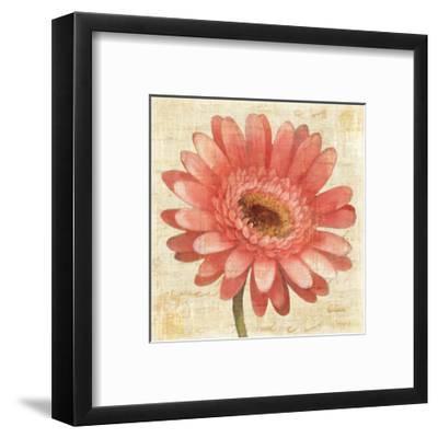 Blushing Gerbera on Cream-Albena Hristova-Framed Art Print