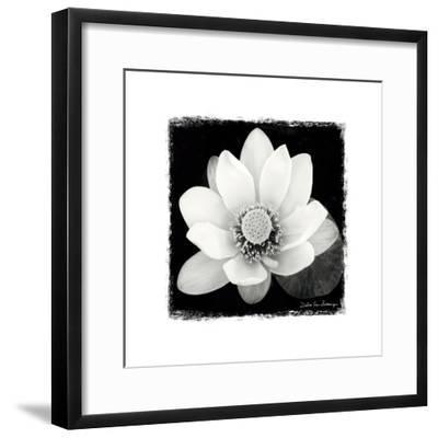 Lotus Flower II-Debra Van Swearingen-Framed Premium Giclee Print