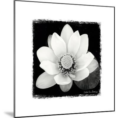 Lotus Flower II-Debra Van Swearingen-Mounted Premium Giclee Print