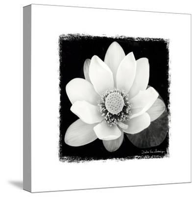 Lotus Flower II-Debra Van Swearingen-Stretched Canvas Print