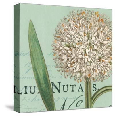Botanique Bleu II-Hugo Wild-Stretched Canvas Print