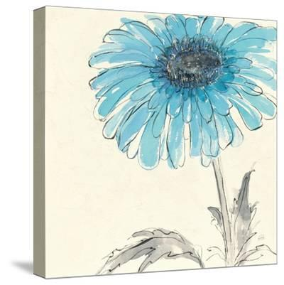 Gerbera Blue II-Chris Paschke-Stretched Canvas Print