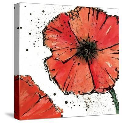 Not a California Poppy on White IV-Chris Paschke-Stretched Canvas Print
