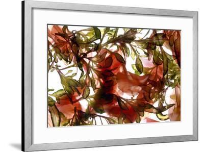 Hibiscus Coleus Array, 2009-Julia McLemore-Framed Photographic Print