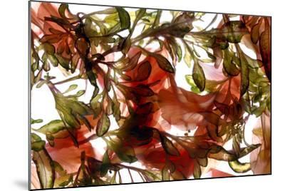 Hibiscus Coleus Array, 2009-Julia McLemore-Mounted Photographic Print