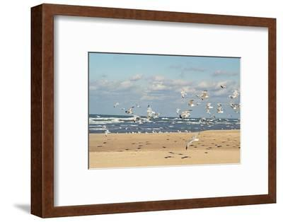 Flock of seaguls on the beaches of Lake Michigan, Indiana Dunes, Indiana, USA-Anna Miller-Framed Premium Photographic Print