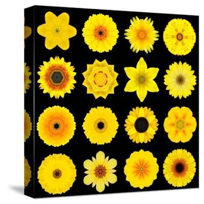 Big Collection of Various Yellow Pattern Flowers-tr3gi-Stretched Canvas Print