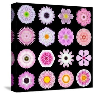 Big Collection of Various Pink Pattern Flowers-tr3gi-Stretched Canvas Print