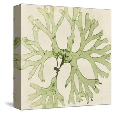 Brilliant Seaweed III--Stretched Canvas Print