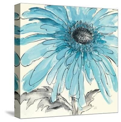 Gerbera Blue III-Chris Paschke-Stretched Canvas Print