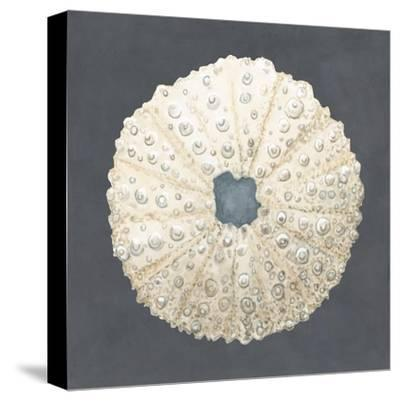 Shell on Slate VII-Megan Meagher-Stretched Canvas Print