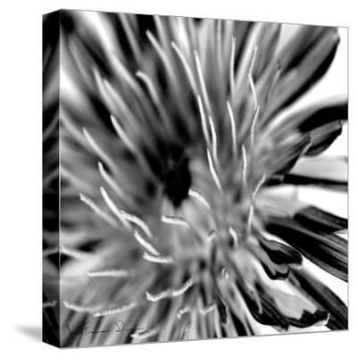 Contrastoflora IV-Jean-Fran?ois Dupuis-Stretched Canvas Print