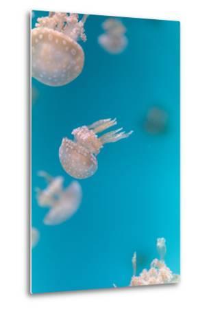 Spotted Lagoon Jelly, Golden Medusa-steffstarr-Metal Print