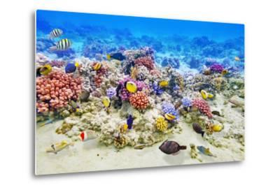 Underwater World with Corals and Tropical Fish.-Brian K-Metal Print
