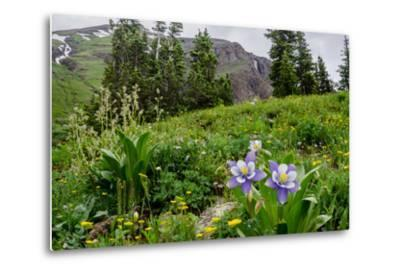Columbine and Wildflowers in Colorado Mountain Basin-kvd design-Metal Print