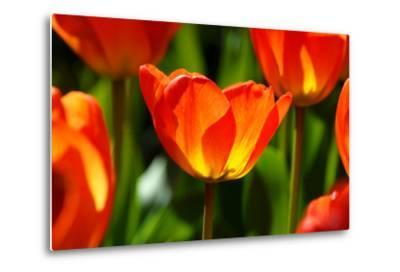 Spring Bling-pudding-Metal Print