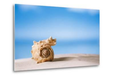 Tropical Shell on White Florida Beach Sand under Sun Light, Shallow Dof-lenka-Metal Print