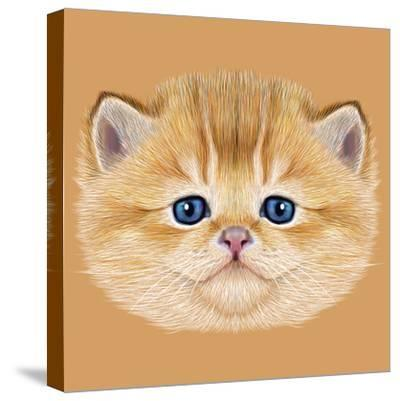 Illustrative Portrait of Domestic Kitten. Cute Peach Kitten with Blue Eyes.-ant_art19-Stretched Canvas Print