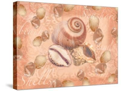 Shells on Shore-Bee Sturgis-Stretched Canvas Print