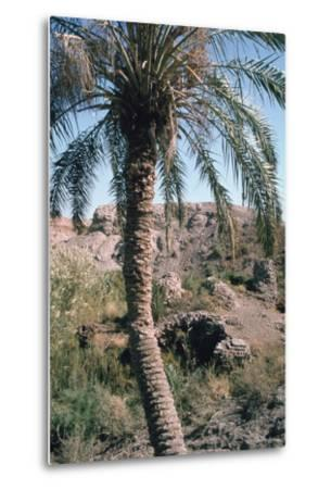 Palm Tree Below Lion of Babylon, Iraq, 1977-Vivienne Sharp-Metal Print