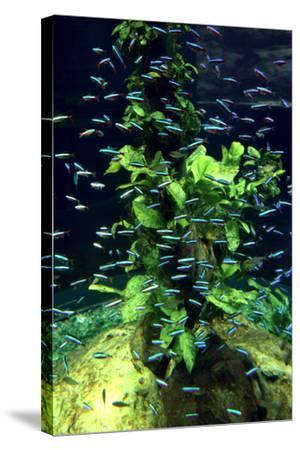 Aquarium, Loro Parque, Tenerife, Canary Islands, 2007-Peter Thompson-Stretched Canvas Print