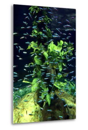 Aquarium, Loro Parque, Tenerife, Canary Islands, 2007-Peter Thompson-Metal Print