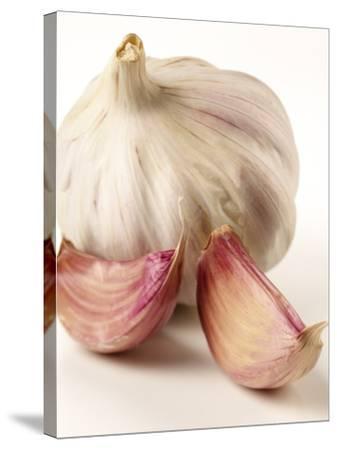 Garlic and Garlic Cloves- Joff Lee Studios-Stretched Canvas Print