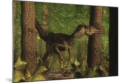 Velociraptor Dinosaur Stands Alert in an Araucaria Tree Forest-Stocktrek Images-Mounted Art Print