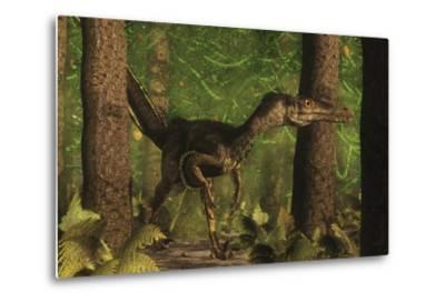 Velociraptor Dinosaur Stands Alert in an Araucaria Tree Forest-Stocktrek Images-Metal Print