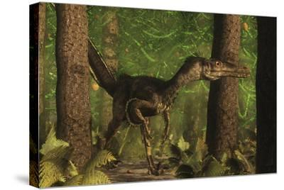Velociraptor Dinosaur Stands Alert in an Araucaria Tree Forest-Stocktrek Images-Stretched Canvas Print