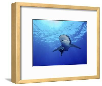 Rays of Light Shining Above an Oceanic Whitetip Shark-Stocktrek Images-Framed Photographic Print