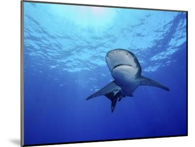 Rays of Light Shining Above an Oceanic Whitetip Shark-Stocktrek Images-Mounted Photographic Print