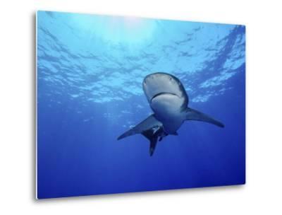 Rays of Light Shining Above an Oceanic Whitetip Shark-Stocktrek Images-Metal Print