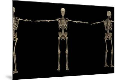 3D Rendering of Human Skeletal System at Different Angles-Stocktrek Images-Mounted Art Print