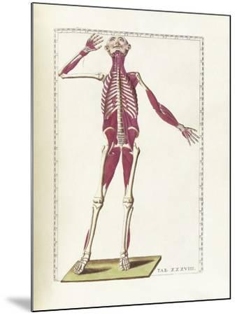 The Science of Human Anatomy by Bartholomeo Eustachi-Stocktrek Images-Mounted Art Print